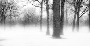 Árvores do inverno em Michigan Imagem de Stock Royalty Free