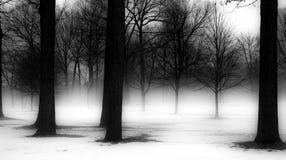 Árvores do inverno em Michigan Imagem de Stock