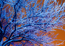 Árvores do inverno na luz azul e no céu nebuloso da noite Fotos de Stock