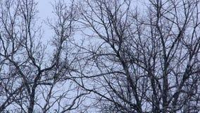 Árvores do inverno na queda de neve video estoque