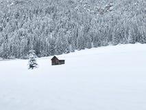 Árvores do inverno nas montanhas cobertas com a neve fresca Imagem de Stock Royalty Free