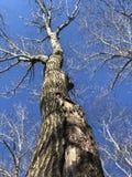 Árvores do inverno no céu imagem de stock