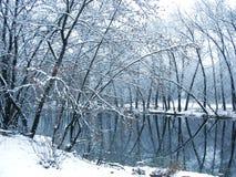 Árvores do inverno no lago Imagem de Stock