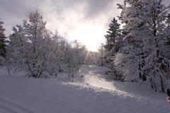 árvores do inverno a saltar luz do sol brilhante imagens de stock royalty free