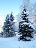 Árvores do inverno sob a neve Fotos de Stock Royalty Free