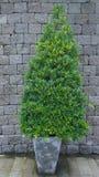 Árvores do jardim Imagens de Stock Royalty Free