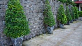 Árvores do jardim Imagem de Stock