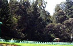 Árvores do jardim Foto de Stock