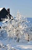 Árvores do jardim cobertas com a neve branca macia Imagem de Stock Royalty Free