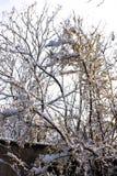 Árvores do jardim na neve do inverno Imagem de Stock Royalty Free