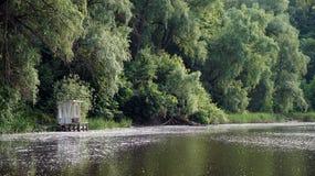 Árvores do lago Foto de Stock Royalty Free