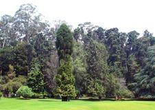 Árvores do monte com prado fotos de stock