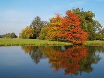 Árvores do outono Fotografia de Stock