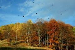 Árvores do outono fotos de stock royalty free
