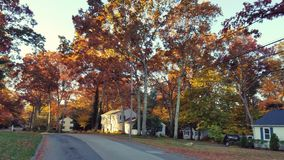 Árvores do outono Imagem de Stock Royalty Free