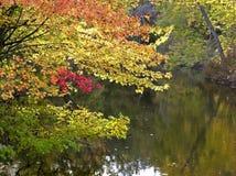 Árvores do outono Imagem de Stock