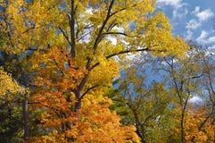 Árvores do outono de encontro ao céu Fotos de Stock Royalty Free