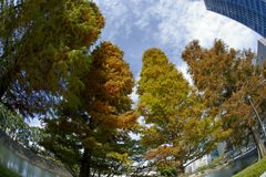 Árvores do outono de Japão Imagens de Stock Royalty Free