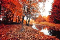 Árvores do outono e tapete caído vermelho das folhas de outono no tempo nebuloso - paisagem colorida do outono em cores do vintag foto de stock royalty free