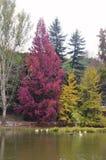 Árvores do outono em torno do lago Árvores da queda refletidas no lago Foto de Stock