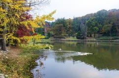 Árvores do outono em torno do lago Árvores da queda refletidas no lago Fotografia de Stock