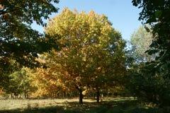 Árvores do outono em um dia ensolarado fotos de stock