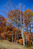 Árvores do outono em uma cena do outono da floresta da montanha com colorido Imagens de Stock