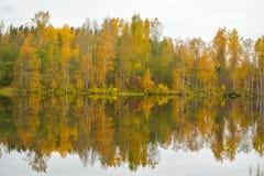 Árvores do outono em uma costa coberto de vegetação do lago imagem de stock