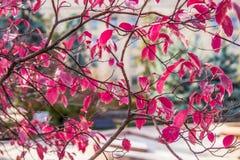 Árvores do outono Folhas de outono coloridas no parque Foto de Stock Royalty Free
