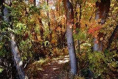 Árvores do outono na floresta fria imagens de stock