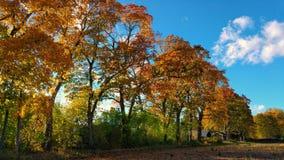 Árvores do outono no campo ensolarado imagens de stock