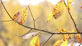 Árvores do outono no parque video estoque