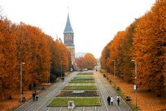Árvores do outono no parque imagem de stock