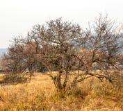 Árvores do outono sem folhas Fotografia de Stock Royalty Free