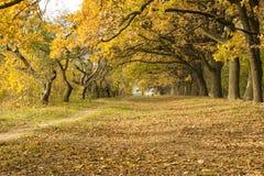 Árvores do Parkland Fotos de Stock Royalty Free
