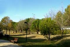 Árvores do parque do banco Fotografia de Stock Royalty Free