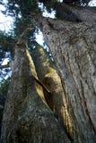 Árvores do parque 004 do EL Ejido Foto de Stock