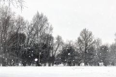 Árvores do parque do inverno da paisagem foto de stock
