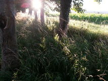 Árvores do por do sol Imagem de Stock Royalty Free