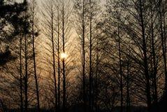 Árvores do por do sol   fotografia de stock royalty free