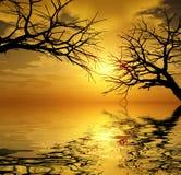Árvores do por do sol Fotografia de Stock