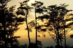 Árvores do por do sol fotos de stock