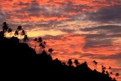 Árvores do por do sol e de coco, Aceh Imagem de Stock Royalty Free