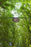 Árvores do poste de luz do passeio Fotos de Stock