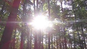 Árvores do resto do raio de sol da floresta quietas video estoque