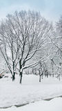 Árvores do tampão da neve no Central Park New York foto de stock royalty free
