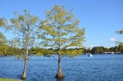 Árvores do verão Fotografia de Stock Royalty Free