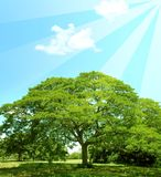 Árvores do verão e raias do sol foto de stock royalty free