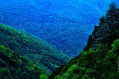 Árvores do verde floresta do verão na montanha, verano do en dos rboles do ¡ de bosque Ã, La Rioja, España, Espanha fotos de stock