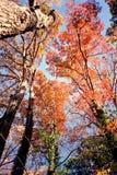 Árvores do vermelho de outubro fotografia de stock
